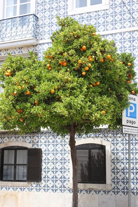 drzewko pomarańcz